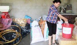 Truy tìm chủ nhân số vàng được dấu trong bao lúa