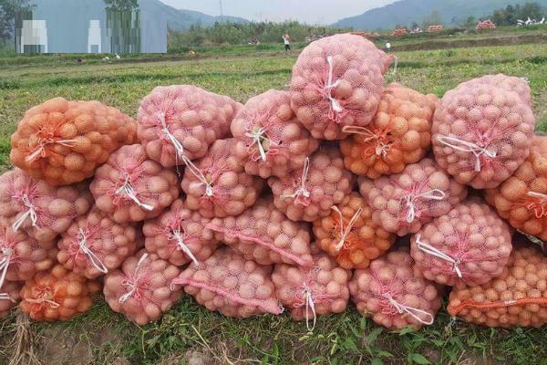 Giải cứu khoai tây, cộng đồng chung tay giải cứu khoai tây