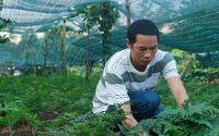 """Thông qua mạng xã hội, anh Nguyễn Tiến Dũng đã tìm được đầu ra ổn định cho cây """"lá lạ""""- dương xỉ Pháp"""