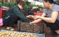 Điểm bán lẻ trái sầu riêng kiêm thu mua hạt sầu riêng.