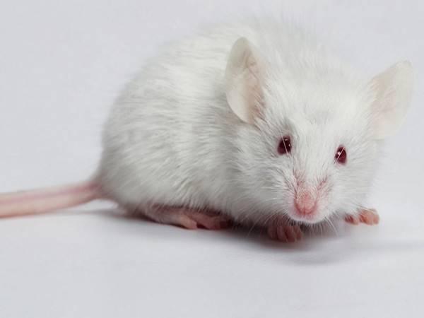Nằm mơ thấy chuột đánh con số nào?